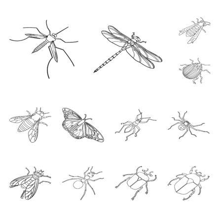 Vector illustration of fauna and entomology. Set of fauna and animal stock vector illustration. Ilustracja