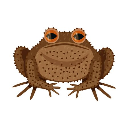 Isolated object of toad and biology sign. Set of toad and tropical stock bitmap illustration.