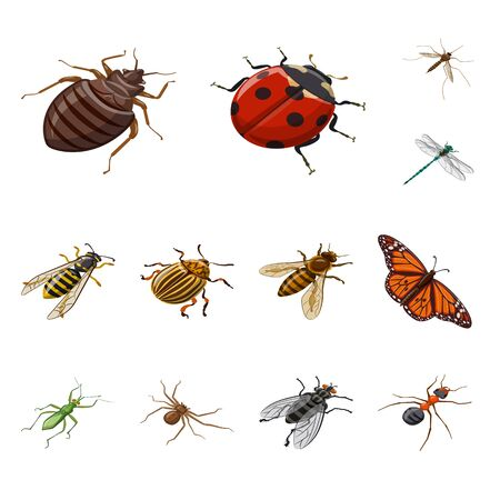 Vector illustration of insect and fly icon. Set of insect and entomology stock vector illustration.
