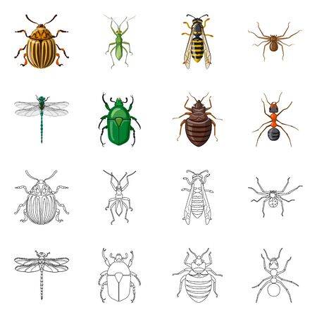 Vector design of insect and fly symbol. Set of insect and element stock vector illustration.