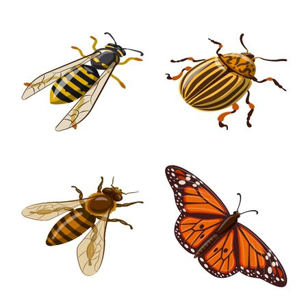 Vector illustration of insect and fly . Set of insect and entomology stock symbol for web.