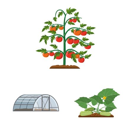 Vector illustration of greenhouse and plant sign. Collection of greenhouse and garden stock symbol for web. Zdjęcie Seryjne - 128478770