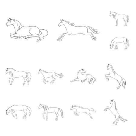 Vector design of stallion and galloping symbol. Collection of stallion and riding stock vector illustration.