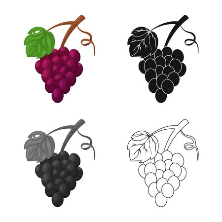 Isolated object of grape and bunch symbol. Collection of grape and fruit vector icon for stock.