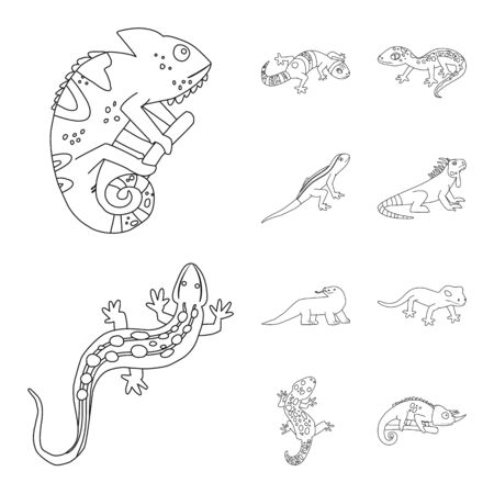 Vector illustration of wildlife and nature symbol. Collection of wildlife and exotic stock vector illustration.