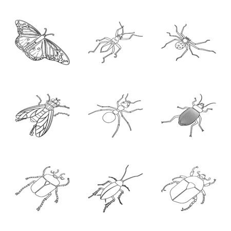 Isolated object of fauna and entomology sign. Collection of fauna and animal stock symbol for web. Ilustracja
