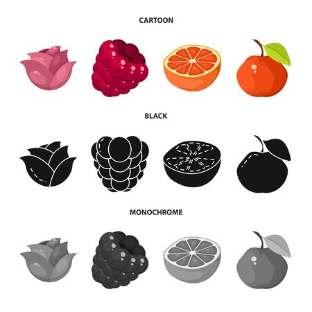 Isolated object of fresh and red  . Collection of fresh and organic stock vector illustration.