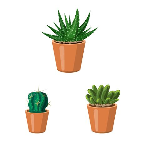 Vector illustration of cactus and pot . Set of cactus and cacti stock symbol for web. Vektorové ilustrace
