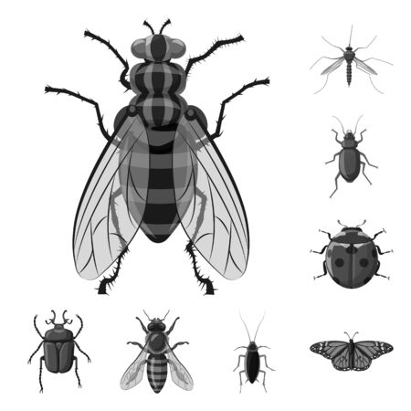 Isolated object of insect and fly logo. Set of insect and element stock vector illustration. Çizim
