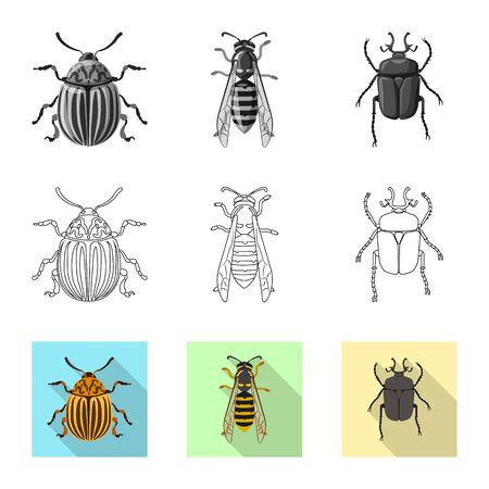 Vector design of insect and fly  . Collection of insect and element vector icon for stock.