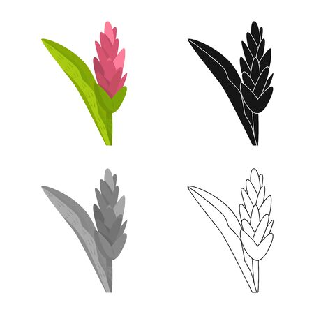 Isolated object of flower and ginger symbol. Set of flower and tropical stock symbol for web. Archivio Fotografico - 129450269