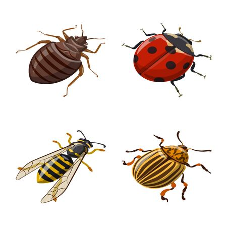 Vector design of insect and fly . Collection of insect and entomology stock vector illustration.