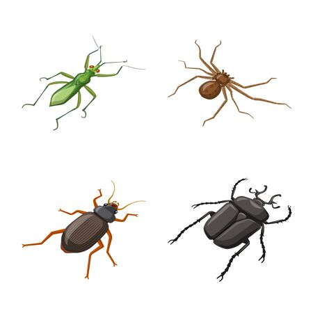 Vector illustration of insect and fly sign. Collection of insect and entomology stock symbol for web. Ilustração