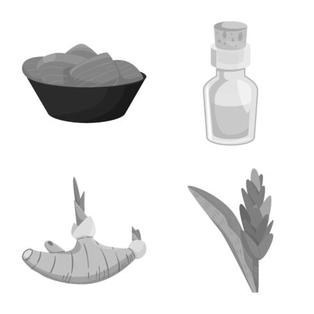 Vector illustration of spice and ingredient symbol. Collection of spice and product stock symbol for web.