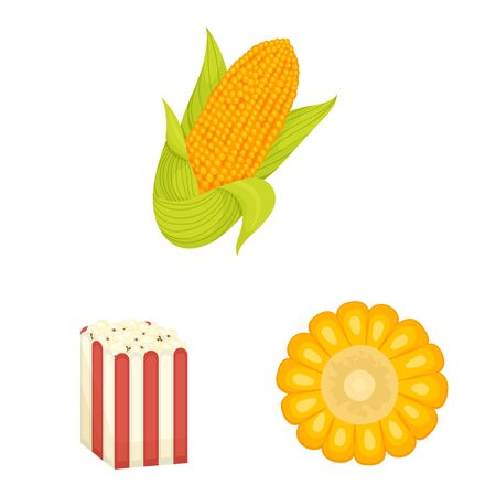 Vector illustration of maize and food logo. Collection of maize and crop stock symbol for web.