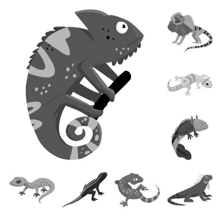 Vector design of wild and exotic symbol. Collection of wild and fauna stock vector illustration.