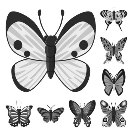 Isolated object of fly and insect symbol. Collection of fly and botanic stock symbol for web. Иллюстрация