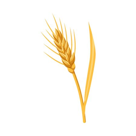 Vector design of barley and sheaf symbol. Set of barley and crop vector icon for stock.