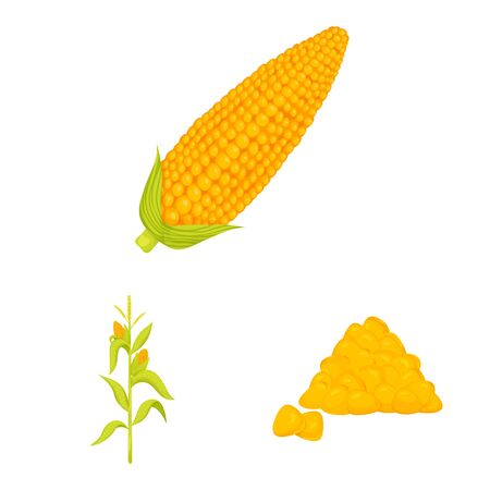Vector illustration of maize and food icon. Collection of maize and crop vector icon for stock.