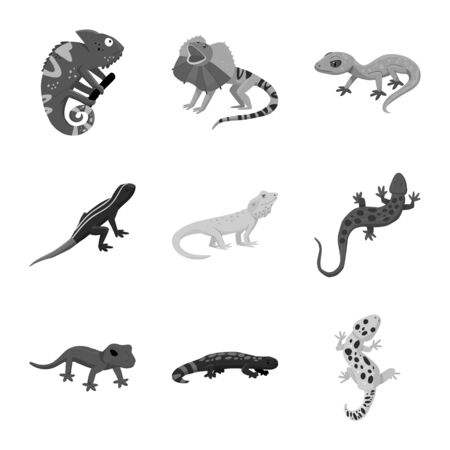 Isolated object of wild and exotic symbol. Set of wild and fauna stock vector illustration.