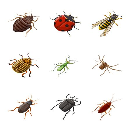 Vector design of insect and fly symbol. Collection of insect and entomology vector icon for stock. Illustration