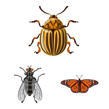 Isolated object of insect and fly symbol. Set of insect and element stock vector illustration. Ilustração