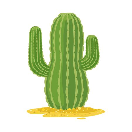 Isolated object of cactus and south logo. Web element of cactus and america stock symbol for web. Illustration