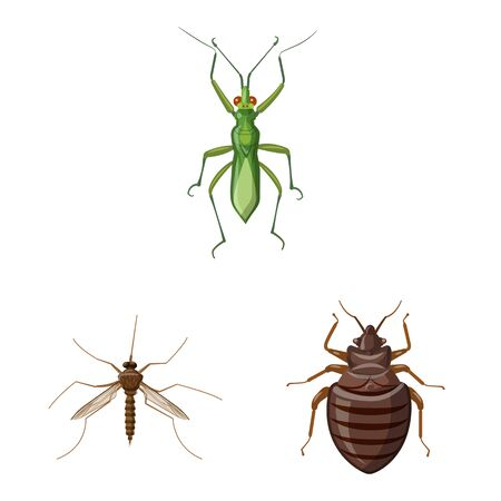 Vector illustration of insect and fly icon. Collection of insect and element stock vector illustration.