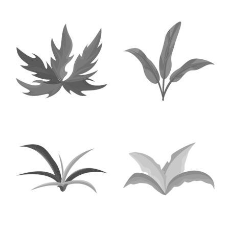 Vector design of foliage and floral sign. Collection of foliage and summer vector icon for stock.