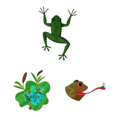Geïsoleerd object van kikker en anuran symbool. Set van kikker en dier aandelensymbool voor web.