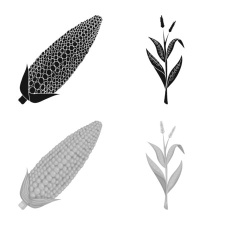 Vector design of cornfield and vegetable logo. Set of cornfield and vegetarian stock vector illustration.