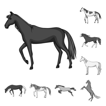 Isolated object of farm and riding icon. Set of farm and equestrian stock symbol for web.