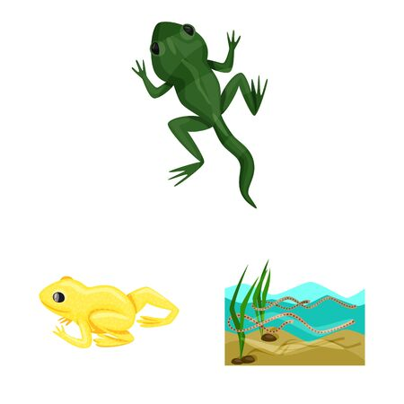 Vector illustration of frog and anuran icon. Collection of frog and animal stock vector illustration.  イラスト・ベクター素材