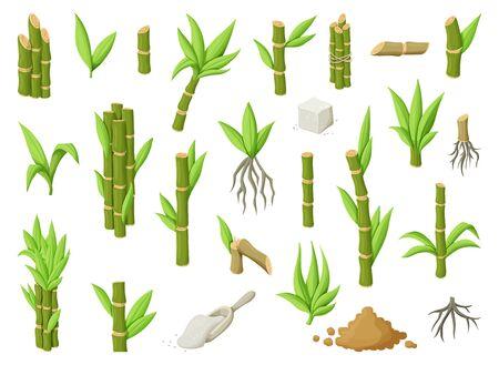 Sugar cane cartoon vector illustration on white background.Sugarcane set icon.Vector illustration of sweet white sugar.Cartoon cane leaf.Set icon of sugarcane plantation. Illustration