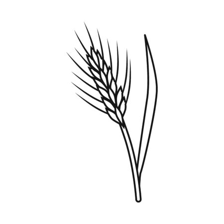 Vector illustration of barley and sheaf sign. Collection of barley and crop stock symbol for web.