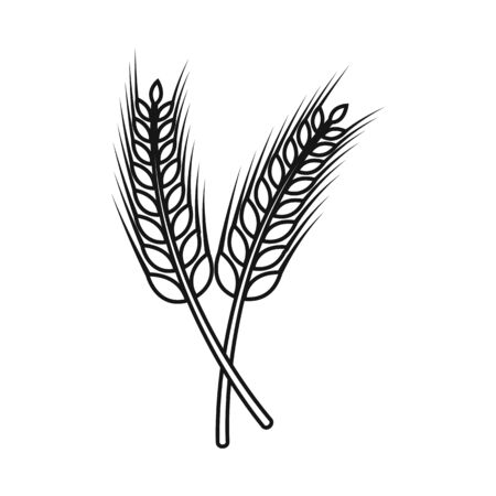 Isolated object of wheat and stalk logo. Collection of wheat and gold stock symbol for web.