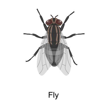 Ikona wektor mucha owadów. Wektor ikona kreskówka na białym tle mucha owadów.
