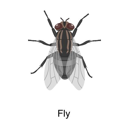 Insect fly vector icon.Cartoon vector icon isolated on white background insect fly.