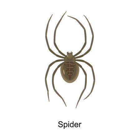 Spider vector icon.Cartoon vector icon isolated on white background spider . Ilustração