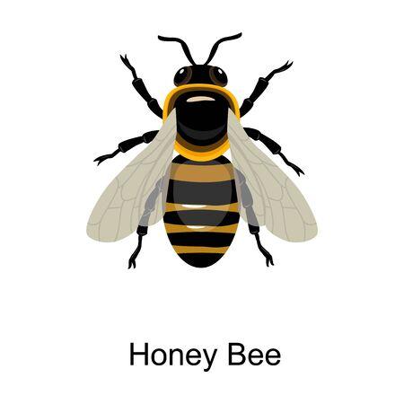 Bee honey vector icon.Cartoon vector icon isolated on white background bee honey. Ilustrace