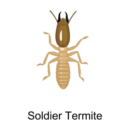 Soldier termite vector icon.Cartoon vector icon isolated on white background soldier termite.
