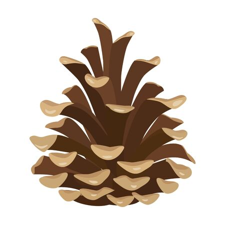 Pineof cone vector icon.Cartoon vector icon isolated on white background pine of cone. Stock Illustratie