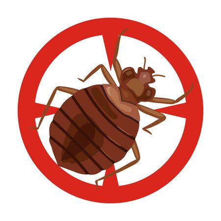 Bedbug vector icon.Cartoon vector icon isolated on white background bedbug .