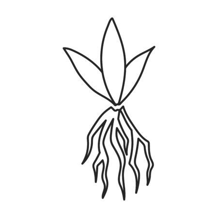 Sprössling von Zuckerrohr-Vektor-Icon.Line-Vektor-Symbol auf weißem Hintergrund Sprössling von Zuckerrohr. Vektorgrafik