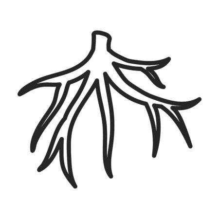 Wurzel von Zuckerrohr-Vektor-Symbol. Linie Vektor-Symbol auf weißem Hintergrund Wurzel von Zuckerrohr. Vektorgrafik