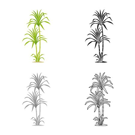 Isolated object of palm and cane icon. Graphic of palm and field vector icon for stock. 일러스트