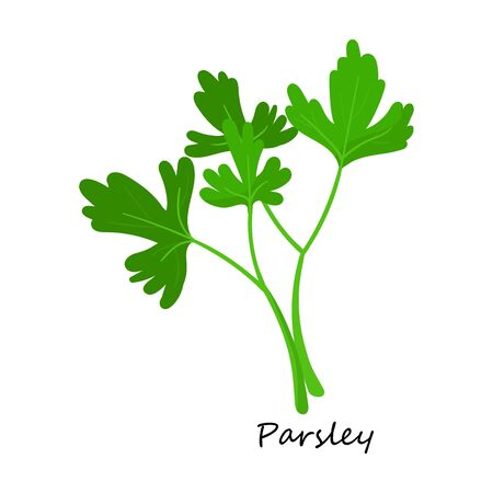 Parsley vector icon.Cartoon vector icon isolated on white background parsley. Векторная Иллюстрация