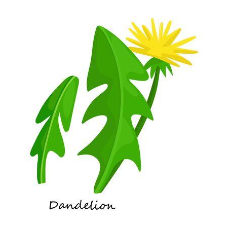Dandelion vector icon.Cartoon vector icon isolated on white background dandelion.