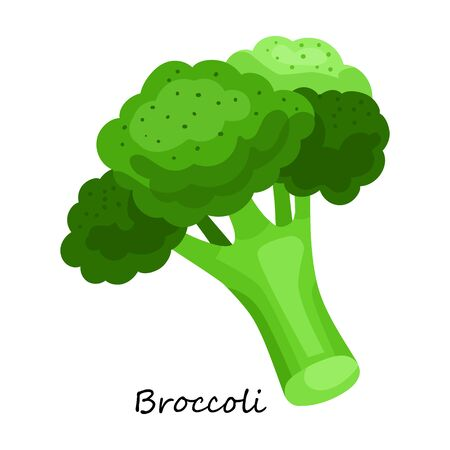 Lettuce vector icon.Cartoon vector icon isolated on white background lettuce .
