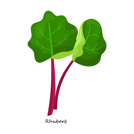 Rhabarber-Vektor-Symbol. Cartoon-Vektor-Symbol auf weißem Hintergrund Rhabarber.